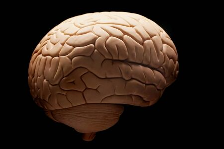 human brain isolated on the black background