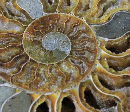 ammonite fossil texture as very nice natural background Banco de Imagens - 129968900
