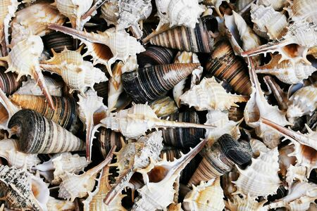 sea shells texture as very nice background