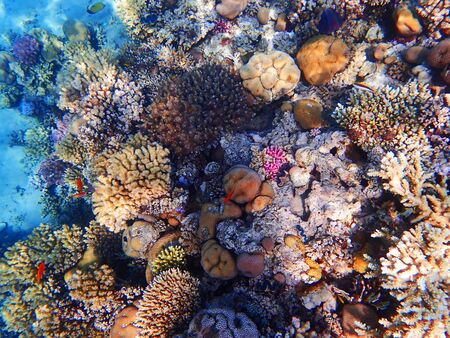 coral reef in egypt as nice natural landscape 免版税图像