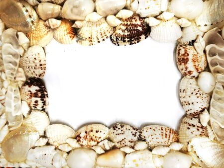 sea shells frame texture as very nice background