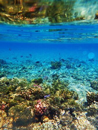 Arrecifes de coral en el Mar Rojo como bonito fondo natural del océano Foto de archivo