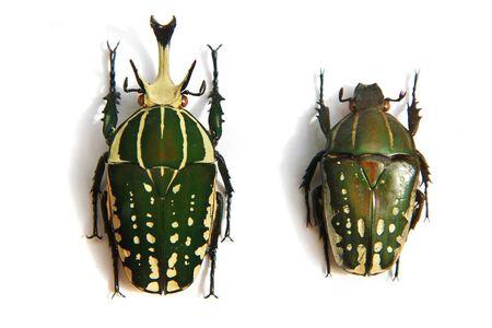 big bug isolated on the white background