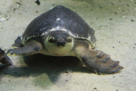tartaruga d'acqua nel mare come bel ritratto Archivio Fotografico