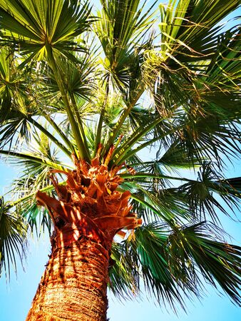 palm tree texture as very nice natural background Banco de Imagens