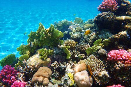 récif de corail en Egypte comme très beau fond naturel