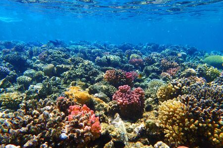 coral reef in Egypt as very nice natural background
