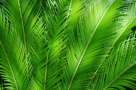 green fern plant texture as very nice background