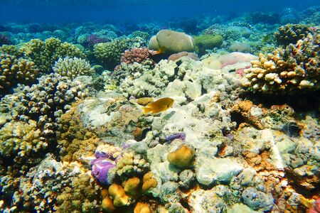 coral reef in Red Sea as nice natural ocean background