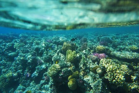 Red sea coral reef in Makadi Bay, Egypt,