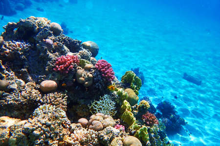 coral sea in the egypt as very nice background