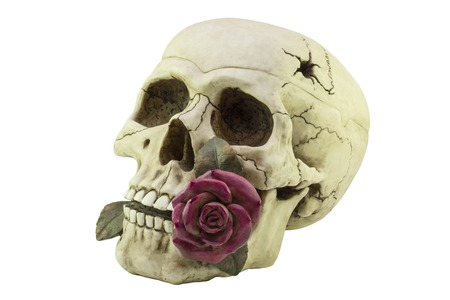 skull with a purple rose in your teeth - statuette Stock Photo