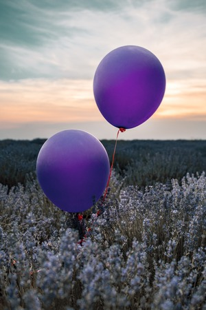 Two balloons in a lavender field. Vertically framed shot.