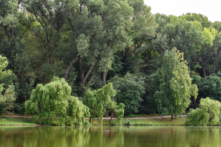 View of Park area. Trees are reflected in lake water. Horizontally framed shot. Imagens