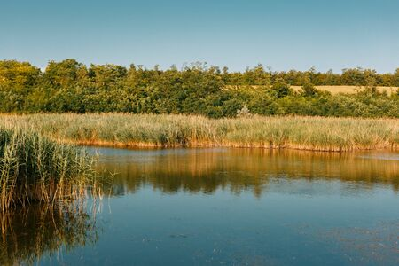 Lake and reeds. Trees in the background. Horizontally framed shot.