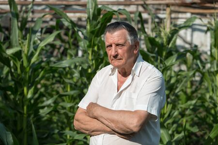 An old gray haired farmer stands with his arms crossed. On background of green ears of corn. Concept of manual labor and home garden. Horizontally framed shot.