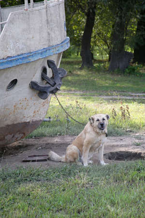 Port dog. Chained to the ship. Vertically framed shot.