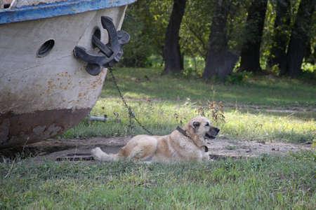 Port dog. Chained to the ship. Horizontally framed shot. 版權商用圖片
