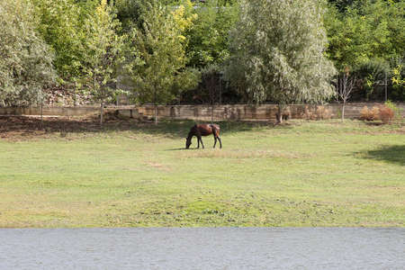 Horse on the riverbank eating grass. Horizontally framed shot.