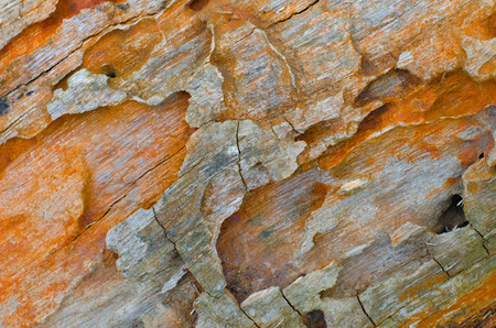 Termite tunnels exposed on a log make colourful and beautiful textures. Stock Photo