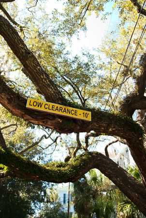 posted: A low clearance sign posted on an old tree. Stock Photo