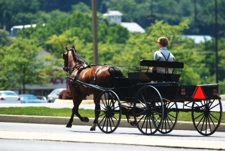 amish buggy: An Amish horse and buggy  traveling down a Pennsylvania street.