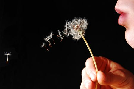 blown: Seeds from a dandylion being blown into the distance.