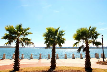three palm trees: Three palm trees on the ocean side of a boardwalk. Stock Photo