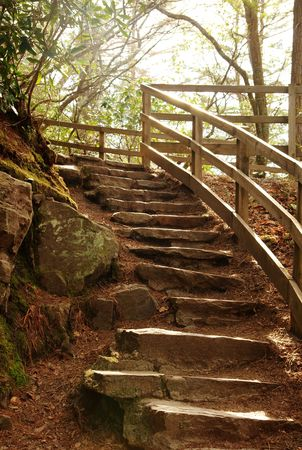 A stair case in the woods that leads downward photo