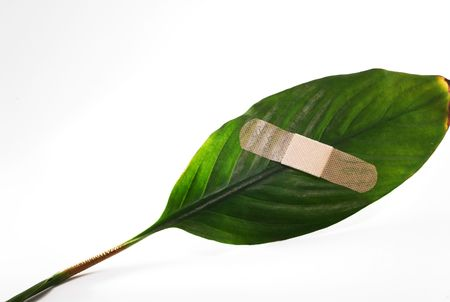 environmentalists: A plaster on a green leaf on white background.