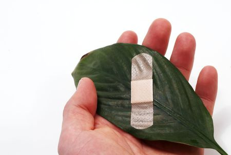 A plaster on a green leaf on white background.