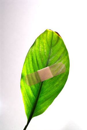 tend: A plaster on a green leaf on white background.
