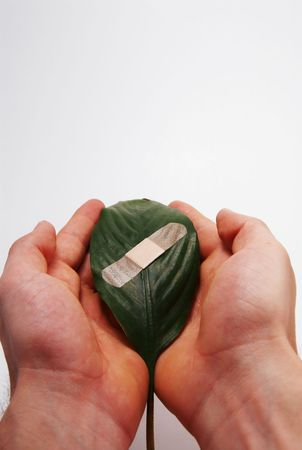 two human hands holding a bandaged leaf