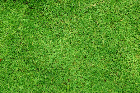 Greenish Grass