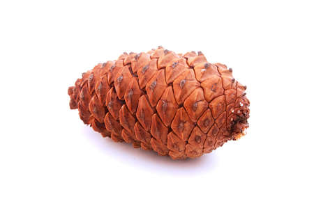 a huge pine cone