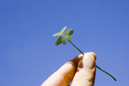 finger holding a clover under the blue sky. concept of lucky, freedom Stock Photo - 395081