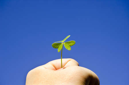 A Strong hand holding a clover under the sunny blue sky Stock Photo