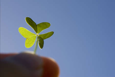 Finger holding a backlighted clover - one of the leaf is nicely backlight which can use to distinct with the other