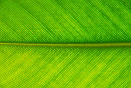 Palm leaf with a strong back light Stock Photo
