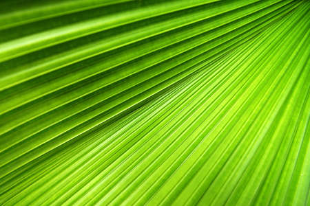 Palm leaf with a strong diagonal through the frame