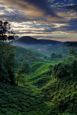 landforms: Cameron Highland at Dawn. Taken at Bharat Tea Plantation