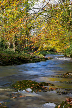 The River Avon at Avonwick South Devon, UK. 版權商用圖片