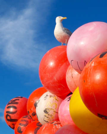 Seagull sat on top of colourful (colorful!) fishing buoys with blue skies behind Stock Photo