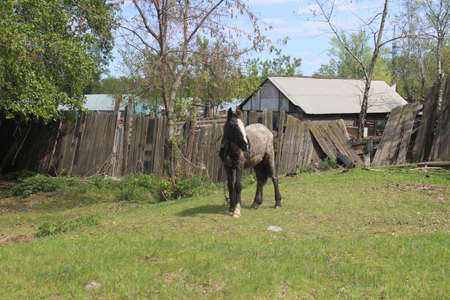 disruption: Horse in a village in Russia