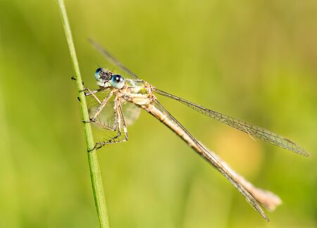 This pretty little dragonfly with transparent wings came and went back to the same grass