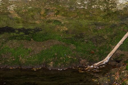 There is a lot of green moss on the rock wall of a river in Spain