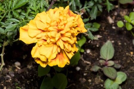 A yellow flower that you find walking through the parks of a city