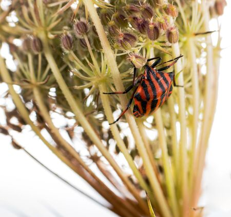 This showy colored bug was on a dried flower 写真素材