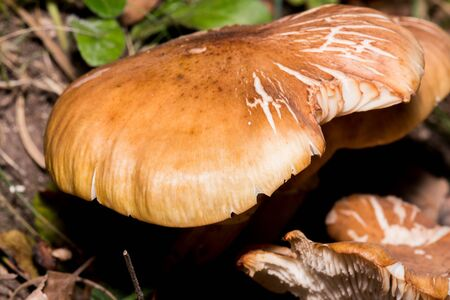 Several photos of different mushrooms in autumn which is when there are more mushrooms 写真素材