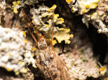 On the bark of a tree photograph the eyes and antennae of an insect Banco de Imagens